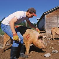 All-Weather TWIST-STIK Livestock Стик-маркер для маркировки и мечения скота